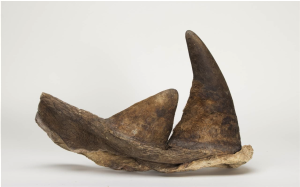 A pair of Kenyan rhinoceros horns, circa May 1964  Sold for $74,750
