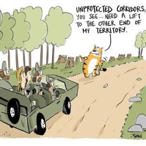 The lack of connecting corridors can lead to increased encounters between tigers and people