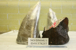Rhino horn is worth more by weight on the black market than gold or diamonds
