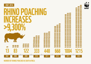 rhino poaching infographic